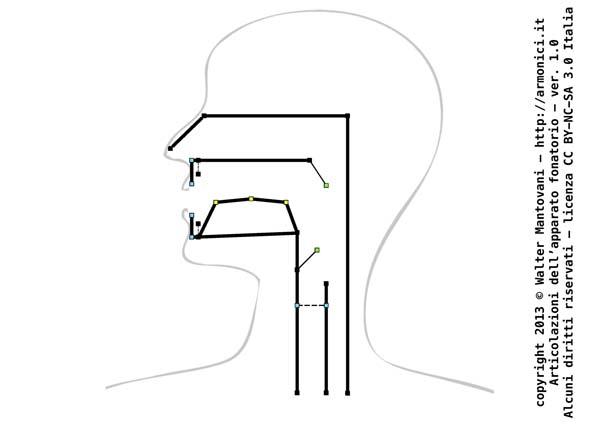 Articolazioni dell'apparato fonatorio