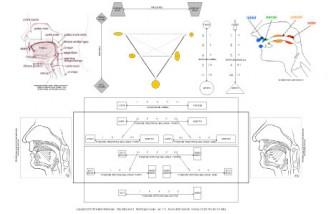 Morfologia del tratto vocale e punti di articolazione